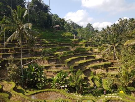 Rizière à Ubud sur l'île de Bali